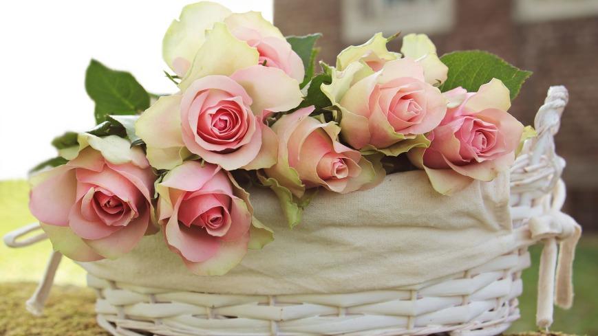 roses-2208357_1920
